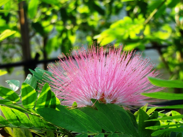 Flowering trees for the landscape for Pink small tree